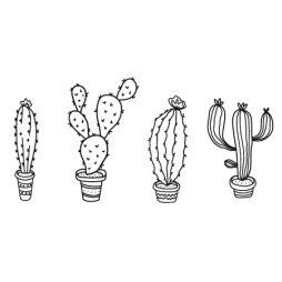 kaktusi-01